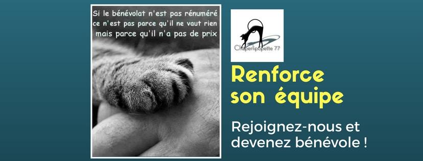 Chaperlipopette 77 Association De Protection Animale Adoption De Chats En Seine Et Marne