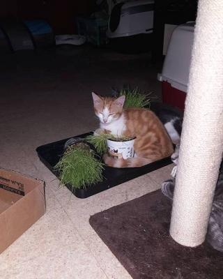 Nesquik et l'herbe à chat