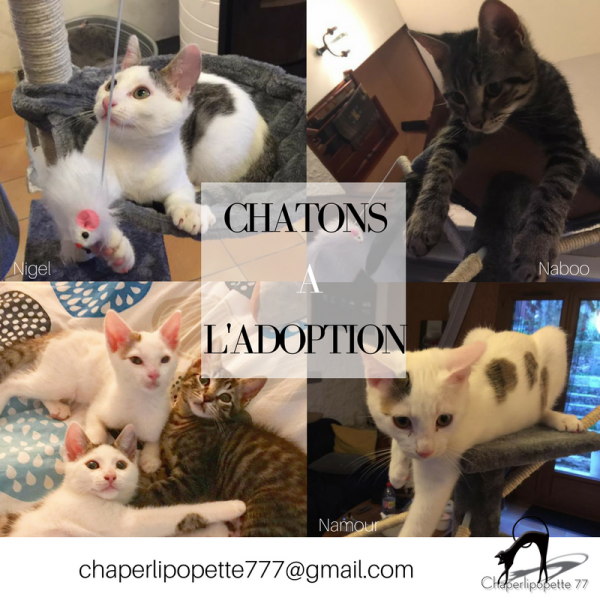 A l adoption chatons naboo namour et nigel version 2