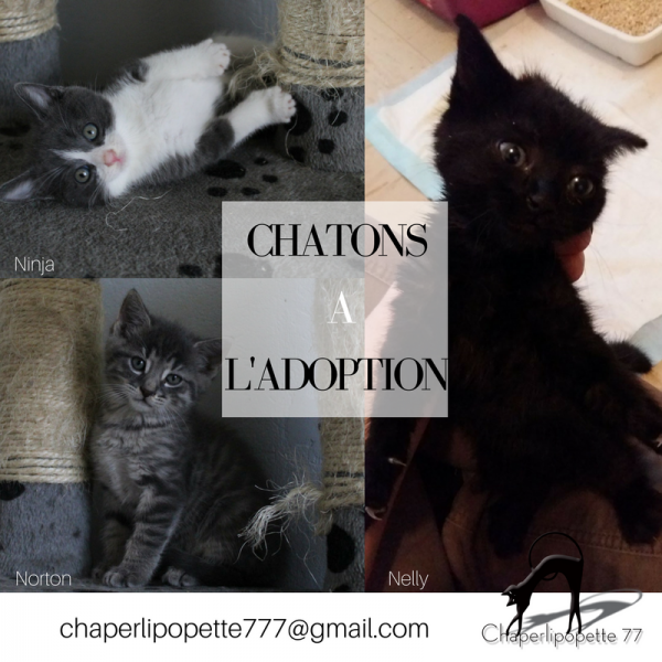 A l adoption chatons ninja nelly et norton