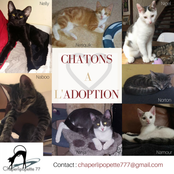 A l adoption tous chatons new