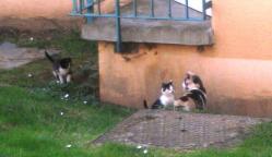 chatonsverneuil2.jpg