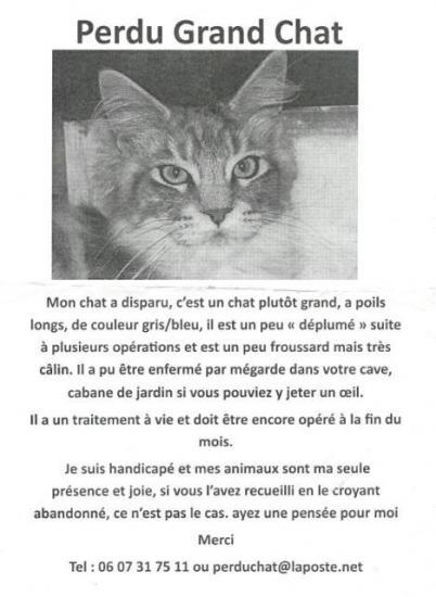 grand-chat.jpg