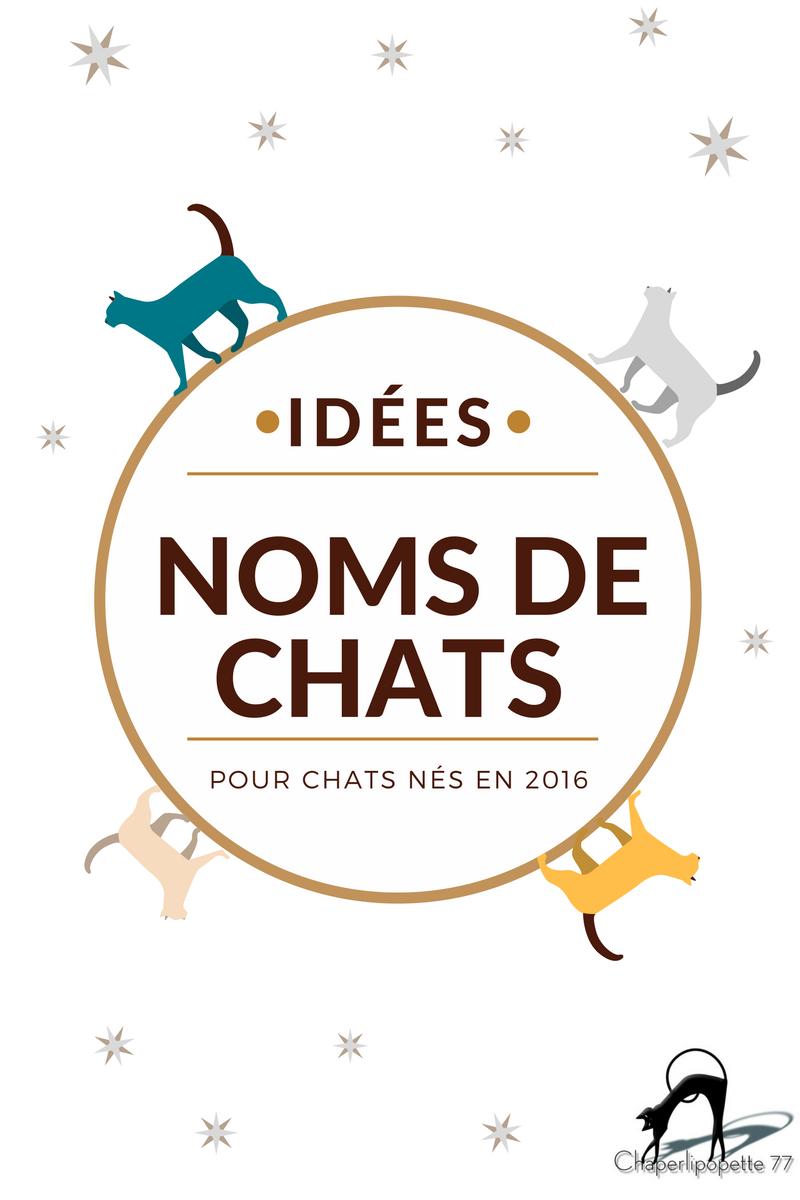 Idées noms de chats 2016