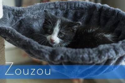 Zouzouf